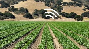 MIT Engineers Create Spinach That Act as Sensors and Wirelessly Send Emails