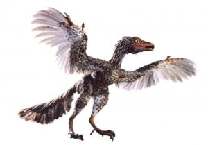 The Archaeoraptor Fraud of National Geographic Magazine